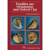 Fossilien aus Ornatenton und Oxfort Clay