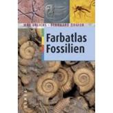 Farbatlas Fossilien