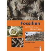 Fossilien sammeln an der Ostseek