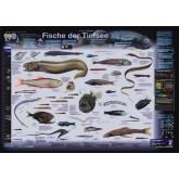 Fische der Tiefsee