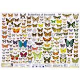 Schmetterlinge der Welt