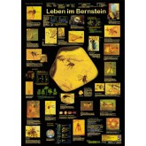 Leben im Bernstein