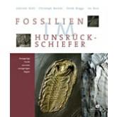 Fossilien im Hunsr